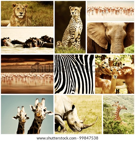 African wild animals safari collage, large group of fauna diversity at African continent, natural themed collection background, beautiful nature of Kenya, wildlife adventure and travel - stock photo