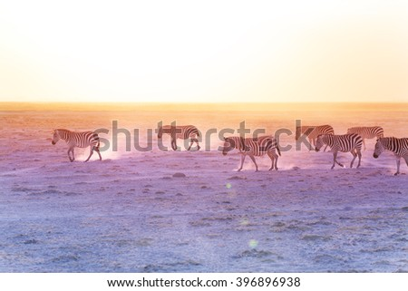 African zebras walking on dusty plains, Kenya - stock photo
