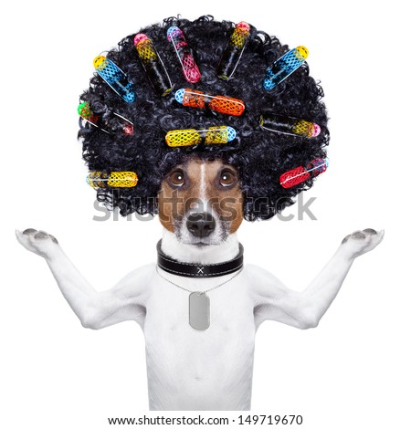 afro look dog with very big curly black hair and hair rollers - stock photo