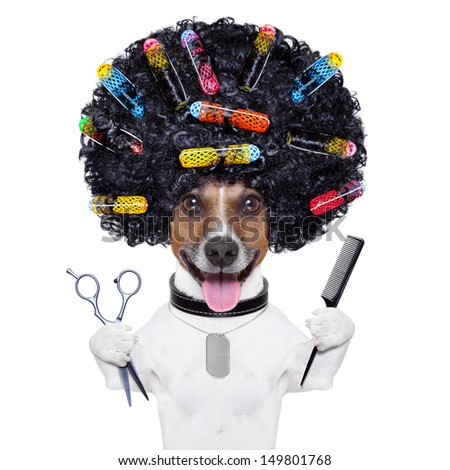 afro look dog with very big curly black hair , scissors and hair comb  with hair rollers - stock photo