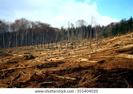 After a forest fire - natural disaster