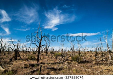 After effects of brush fires - stock photo