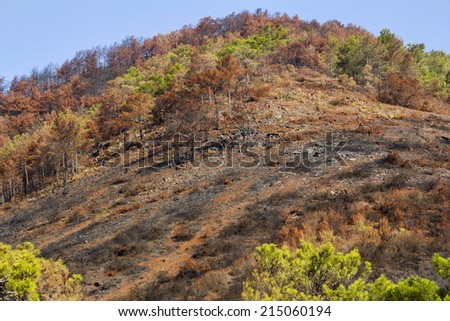 After forrest fire in Adrasan/Antalya - stock photo
