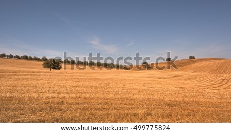 after harvest , Ourique, Alentejo, Portugal