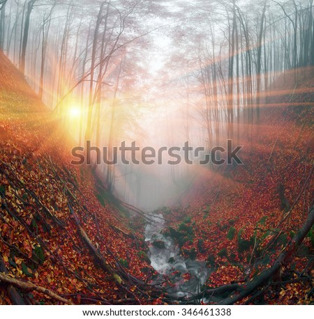 After rain beautiful beautiful ancient beech forest near the river is covered by mysterious haze. In the Ukrainian Carpathians plenty of clean water and pristine old forests - stock photo