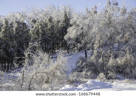 After the ice storm - stock photo