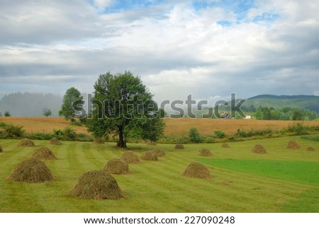 after the rain misty morning on a rural landscape, Montenegro - stock photo