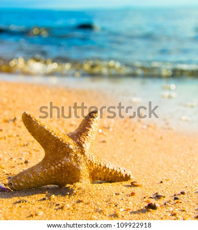 After the Storm Starfish called Wanda - stock photo