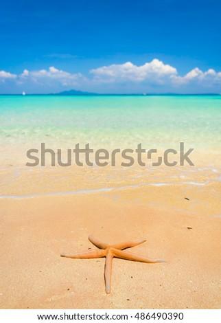 After the Storm Starfish called Wanda