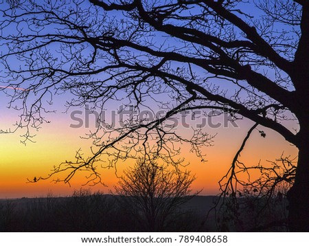 Afterglow and silhouetted tree branches in the Herefordshire countryside, UK