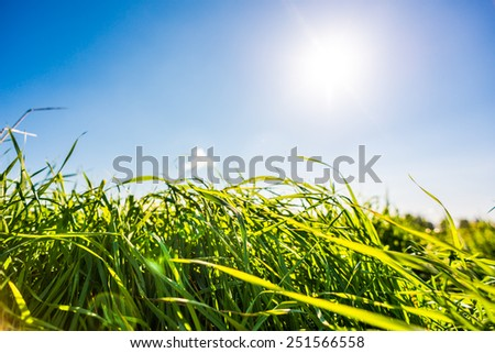 Afternoon sun with cloud over the meadow, dew on the grass. View from ground level, focus on the grass - stock photo
