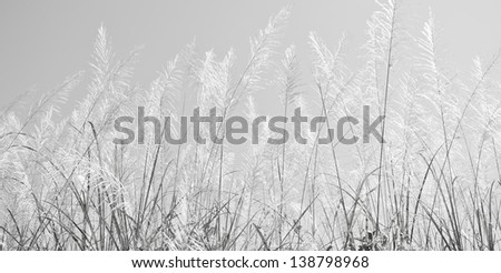 against the blue sky - stock photo