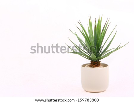 Agave in pot - stock photo