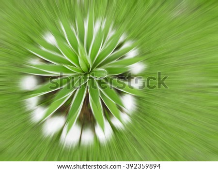 Agave - selective focus - radial zoom - blur - stock photo