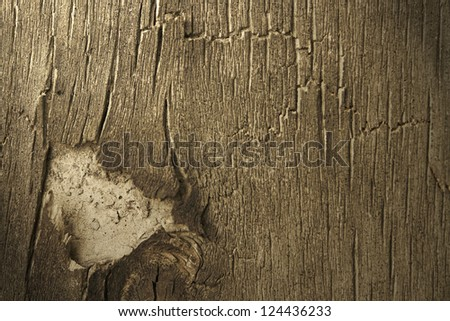 Aged bark closeup (design element texture)