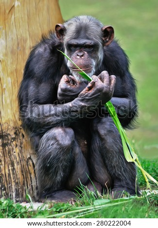 Aged chimpanzee sitting at the tree - stock photo