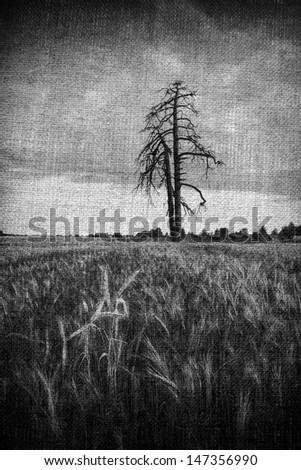 aged corn field and old tree background - stock photo