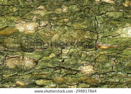 Aged cracked tree bark texture closeup - stock photo