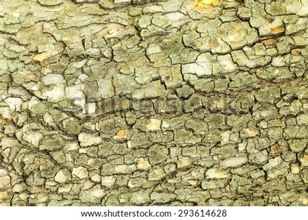 Aged green cracked mossy tree bark texture closeup - stock photo