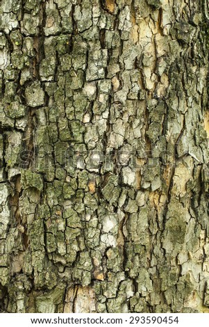 Aged green tree bark texture closeup - stock photo