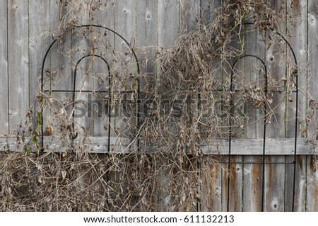 Dead Vines Stock Images Royalty Free Images Amp Vectors