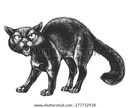 Aggressive black cat on a white background - stock photo
