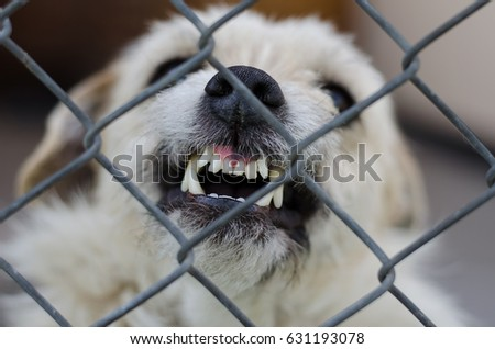 Aggressive white dog with crooked bared teeth in a rage behind metal grid, selective focus, close up