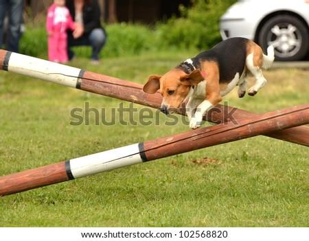 agility - stock photo