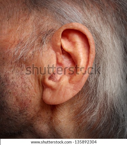 Aging hearing loss with an elderly ear close up of an old man with grey hair as a health care medical concept of losing the ability and human sense of hearing due to age and disease. - stock photo