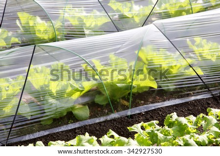 Agricultural building for farming of vegetables - stock photo