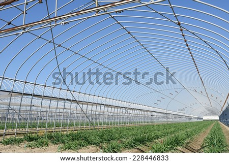 Agricultural building for farming of vegetables, against a blue sky