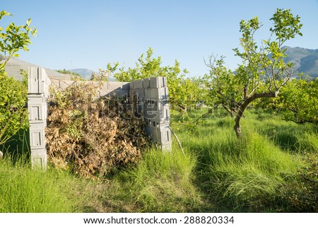 Agricultural burner made of concrete blocks and filled with waste from pruning citrus trees
