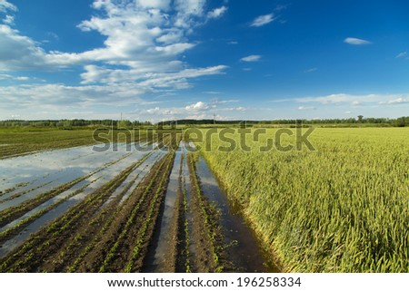 Agricultural disaster, fields of flooded crops. - stock photo