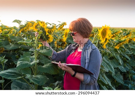 Agricultural expert inspecting quality of sunflower