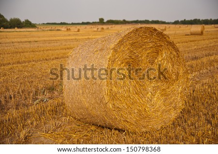 agricultural Field after the harvest with bales - stock photo