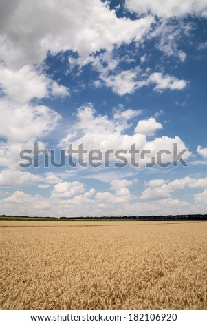 agricultural field and cloudy sky