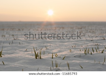 Agricultural field covered with snow in the sunset