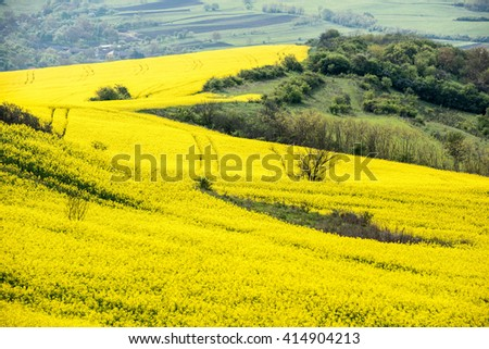 Agricultural field of rapeseed, plant for green energy. Agricultural Fields.