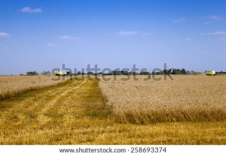 agricultural field on which carry out wheat cleaning - stock photo