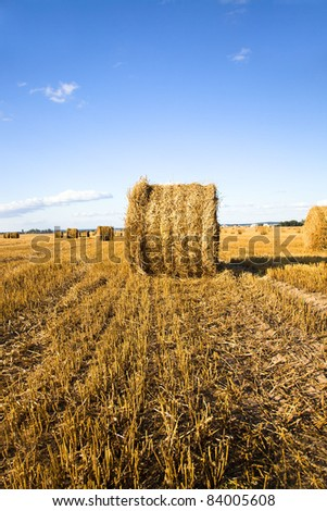 Agricultural field on which have cleaned wheat and have combined straw in a stack - stock photo