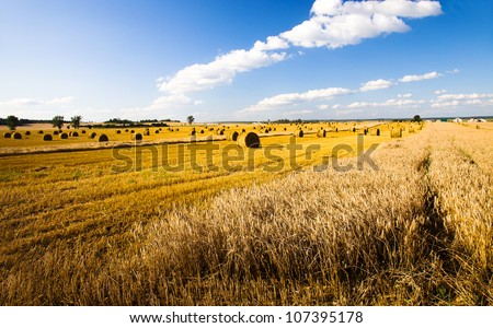 agricultural field on which the crop of cereals is partially reaped - stock photo