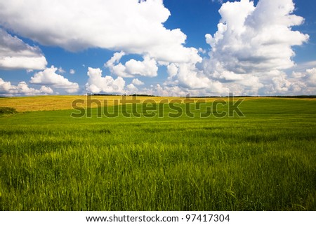 agricultural field on which unripe green wheat grows. summer - stock photo