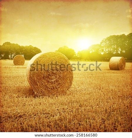 Agricultural field with hay bales at sunset in grunge and retro style. - stock photo