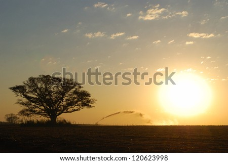 agricultural irrigation at sunset - stock photo