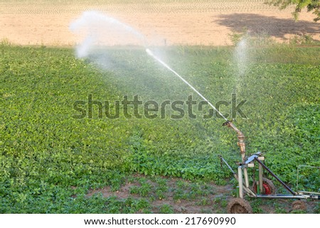 agricultural irrigation - field with young plants watered with the irrigator   - stock photo