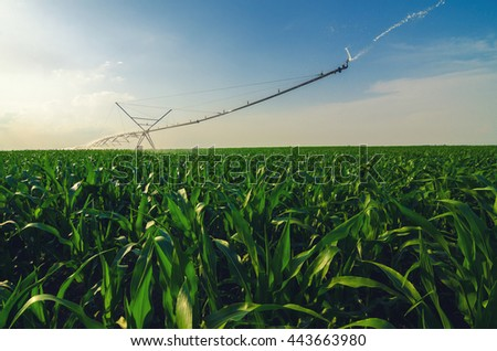 Agricultural irrigation system watering corn field on sunny summer day - stock photo