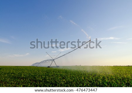 Agricultural irrigation system watering field of green corn on sunny summer morning.
