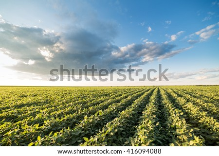 Agricultural landsape, arable crop field - stock photo