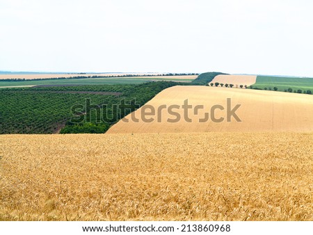 Agricultural landscape - wheatfield and gardens in harvest season - stock photo