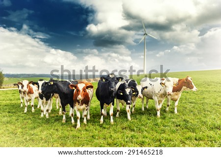 Agricultural landscape with herd of cows looking at camera - stock photo